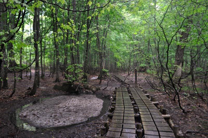 $白神山地ツアーの白神なびスタッフブログ-2012年6月上旬の白神山地・雨の岳岱8