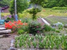 会津高原たかつえ|TAKATSUEスタッフブログ☆Takatsue's Back door-自宅の庭