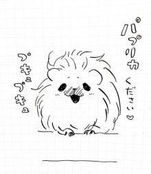 巻き毛ふわふわモルモット-なつめ10