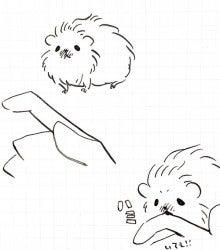 巻き毛ふわふわモルモット-なつめ12