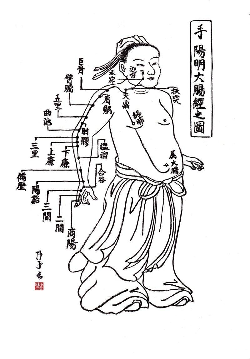 経絡学説 ~手陽明大腸経~
