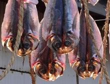 未来開発 <心のニュートラル>-キャットフェイスの魚