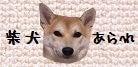 $柴犬あられ日記