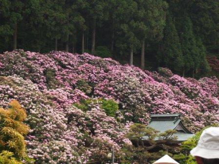 秋田犬カイの日常-横峰寺1