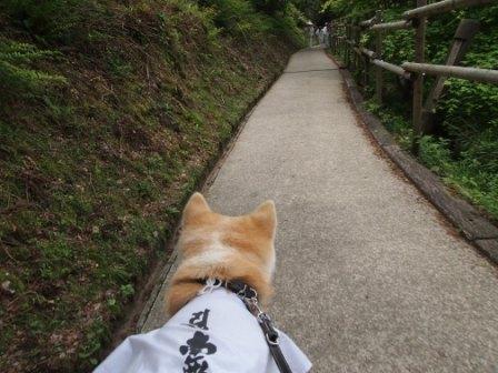 秋田犬カイの日常-横峰寺