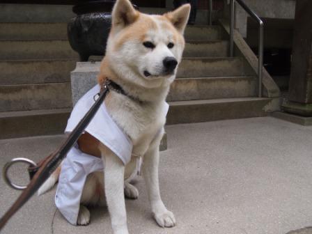 秋田犬カイの日常-三角寺6