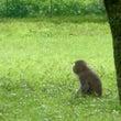 野猿に出会う