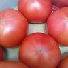 フルーツトマトの画像