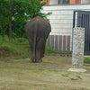 姿勢正しい象。の画像