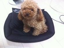 $ペットと人のファッションブランドAvec Dog Presence-ipodfile.jpg