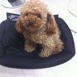 愛犬メルシィ