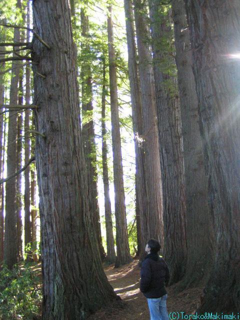 ニュージーランド半自給自足生活-神秘的な森