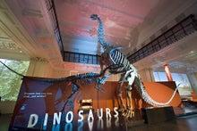 きっこの毎日-Dinosaurs room
