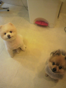 ASAMI's DOG LIFE-2012061218150001.jpg
