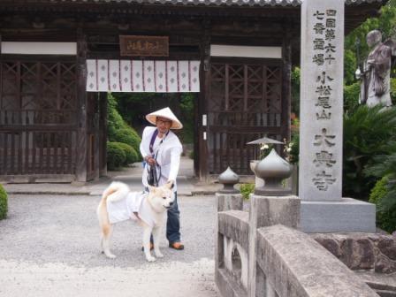 秋田犬カイの日常-大興寺