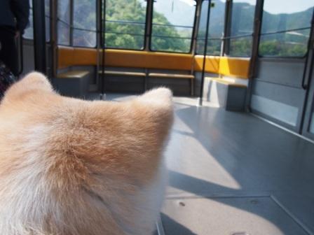秋田犬カイの日常-雲辺寺1