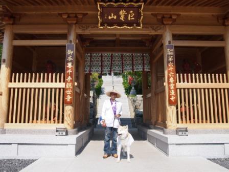 秋田犬カイの日常-雲辺寺6