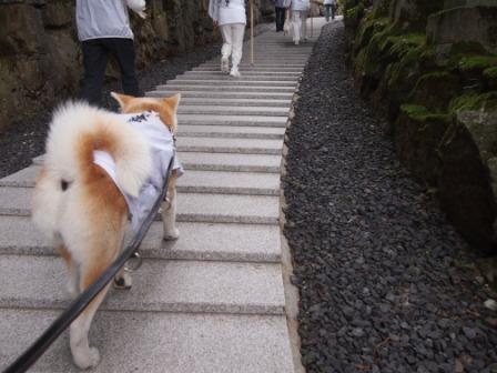 秋田犬カイの日常-雲辺寺9