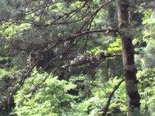 プルメリアDiary-2012061515170001.jpg