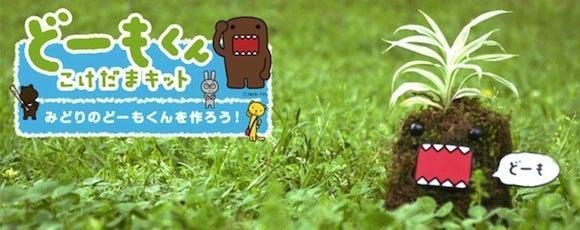 """みどりのともだちを作ろう!""""The Green Friend Project""""を運営する和大地BLOG(苔玉ワークショップ×キャラクター)"""