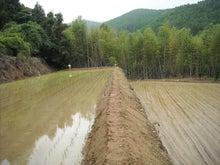 美と健康の米ぬか|諫早ふみちゃん農園ふみちゃんブログ