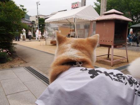 $秋田犬カイの日常-曼荼羅寺2