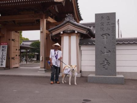 秋田犬カイの日常-甲山寺