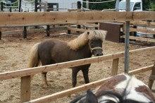 馬を愛する男のブログ Ebosikogen Horse Park-仔馬の父