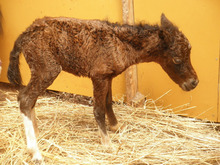 馬を愛する男のブログ Ebosikogen Horse Park-チェリーの赤ちゃん