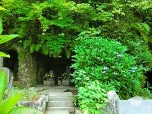 $松尾祐孝の音楽塾&作曲塾~音楽家・作曲家を夢見る貴方へ~-裏手の墓地にも紫陽花が・・・