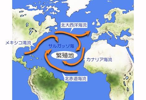 川崎悟司 オフィシャルブログ 古世界の住人 Powered by Ameba-サルガッソ海