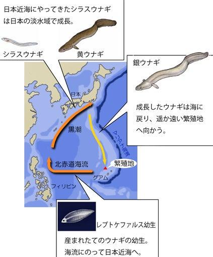川崎悟司 オフィシャルブログ 古世界の住人 Powered by Ameba-ウナギの生涯