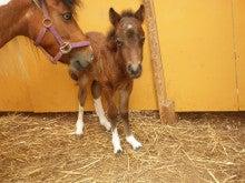馬を愛する男のブログ Ebosikogen Horse Park-3日目
