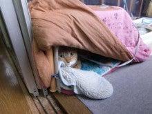 猫の*きゅうちゃん*のゆる~い写真とぶろぐ-おこた・・・ちょっと暑い