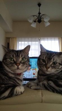 「ぼくたちネコだけど。」-DVC00010.jpg