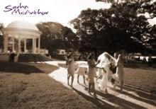 $きっこの毎日-wedding at balmoral beach