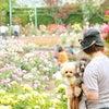 2000本の満開のバラの画像