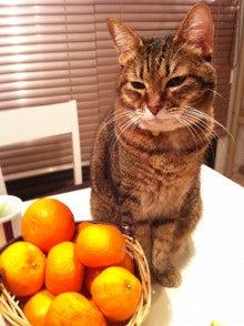 ようこそ 猫キャバ へ-しぃ