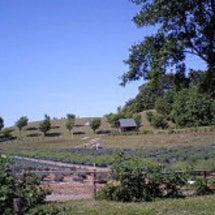 ラベンダー園
