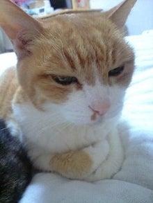 ずれずれブログ…湘南で猫と暮らせば…-120623_2244~0001.jpg