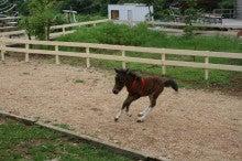 $馬を愛する男のブログ Ebosikogen Horse Park
