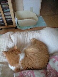 ずれずれブログ…湘南で猫と暮らせば…-120624_1301~0001.jpg