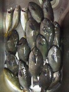 Fhishing Club 釣 釣 魚-クロ