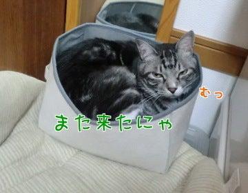 羊毛DEわんこグッズ☆~もこ*くろとくろたん♪~