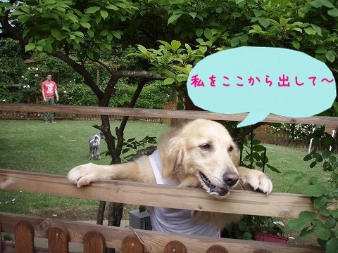 Enjoy ワン!derful Life♪