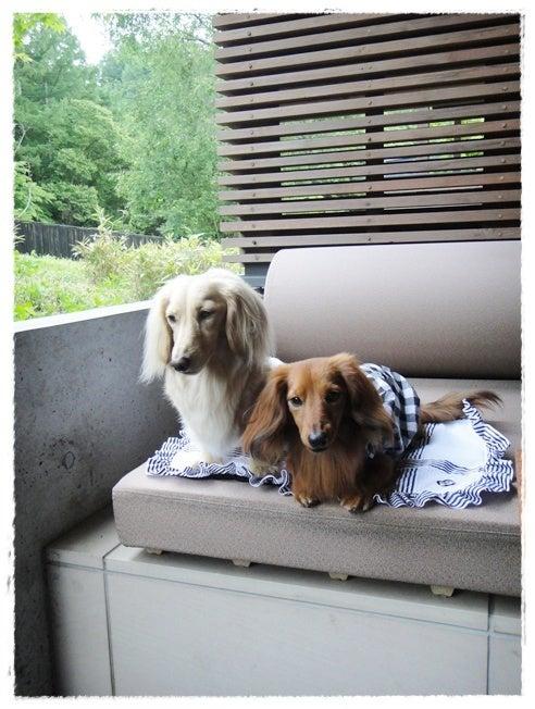 旅犬Lani&Leaのほほん風船記-hoshinoya
