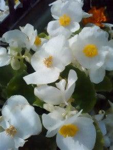 花セラピストnoriko ~花セラピストスクールPOLKA~横浜-120627_1544~02.jpg