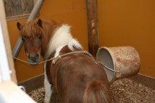 馬を愛する男のブログ Ebosikogen Horse Park-たもちゃんの得意技