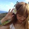 HAWAII。の画像