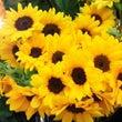 sunflower♪…